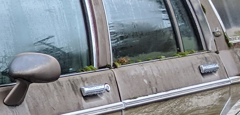 Moss covers window trim of this 1977 Chevrolet Caprice Estate woodside or woody station wagon in Northern California